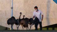 ब्राजील के राष्ट्रपति जेयर बोलसोनारो को प्रेसिडेंट पैलेस में क्वॉरेंटाइन के दौरान बड़े पक्षी ने काटा