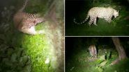 इंदौर: कंपेल गांव में दो तेंदुए आपस में भिड़े, वन विभाग ने रेस्क्यू कर घायल तेंदुए को बचाया, दूसरे की खोज जारी