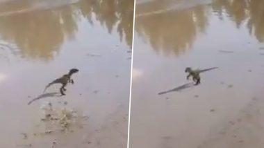 पानी के पोखर में खेलते नन्हे डायनासोर का वीडियो वायरल, जिसे देख आप भी कहेंगे कि ऐसा 3D एनीमेशन पहले कभी नहीं देखा (Watch Viral Video)