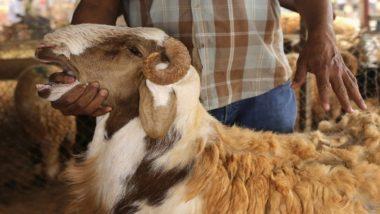 COVID-19 महामारी के कारण फीका पड़ा बकरीद का रंग, बकरियों की खरीदी में गिरावट दर्ज