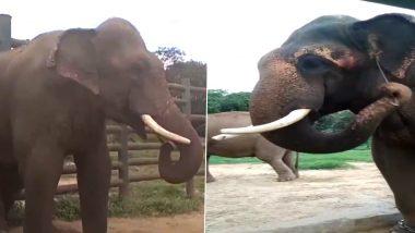 अपनी सूंड में लकड़ी पकड़कर हाथी ने किया यह कारनामा, वायरल वीडियो देख आपको भी आ जाएगी हंसी (Watch Viral Video)