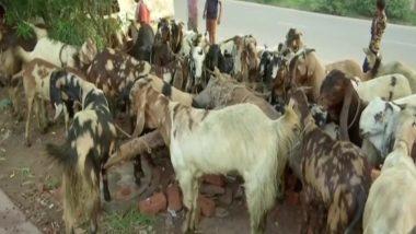 Bakrid 2020: बकरीद का पर्व 1 अगस्त को मनाया जाएगा, अपने बकरों को बेचने के लिए यूपी से दिल्ली पहुंचे लोग