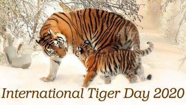 International Tiger Day 2020: अंतरराष्ट्रीय बाघ दिवस आज, जानें बाघों के संरक्षण के प्रति प्रोत्साहित करने वाले इस दिन का इतिहास और महत्व