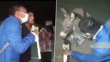 पत्रकार ने लिया गधे का मजेदार इंटरव्यू, बिना मास्क के घूमने वालों को मजाकिया अंदाज में दिया यह खास संदेश (Watch Viral Video)
