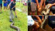 Burmese Python: असम के नागांव जिले में बर्मीज अजगर को देख मची खलबली, काफी  मशक्कत के बाद वन विभाग ने किया रेस्क्यू (Watch Video)