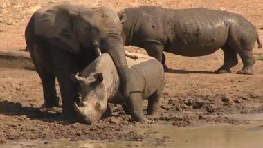 अपनी सूंड की मदद से हाथी ने गेंडे को लगाया गले, उसके प्यार जताने के तरीके ने जीता सोशल मीडिया यूजर्स का दिल (Watch Viral Video)