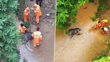 Baby Elephant Found Dead in Kerala: केरल में पुल के नीचे मिला हाथी के बच्चे का शव, वन विभाग जांच में जुटी