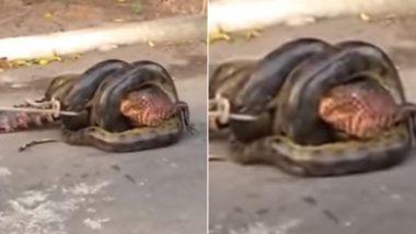 Anaconda Swallowing Huge Alligator: जब विशाल मगरमच्छ को एनाकोंडा करने लगा निगलने की कोशिश, इस वायरल वीडियो को देख उड़ जाएंगे आपके होश