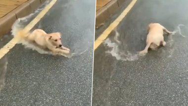 Dog Enjoys Rain: बारिश का लुत्फ उठाते कुत्ते का मजेदार वीडियो हुआ वायरल, जिसे देख आपके चेहरे पर भी आ जाएगी मुस्कान (Watch Viral Video)
