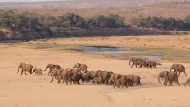 World Elephant Day 2020: दौड़ लगाता दिखा हाथियों का विशाल झुंड, विश्व हाथी दिवस पर वायरल हुआ इस अनोखी रेस का वीडियो (Watch Viral Video)