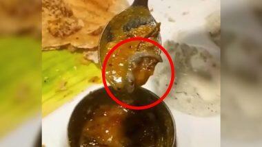 दिल्ली के फेमस रेस्टोरेंट सरवण भवन ने की बहुत बड़ी चूक, सांभर में परोसा मरी हुई छिपकली- केस दर्ज (Watch Viral Video)