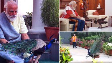 PM Modi Feeds Peacocks: मोर को खाना खिलाते नजर आए प्रधानमंत्री नरेंद्र मोदी, वीडियो में दिखा इस खूबसूरत पक्षी के प्रति उनका प्यार (Watch Video)