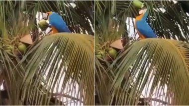 Parrot Drinks Coconut Water: नारियल पानी पीकर अपनी प्यास बुझाते Macaw तोते का वीडियो हुआ वायरल, जिसे देख आपको भी आ जाएगा उस पर प्यार