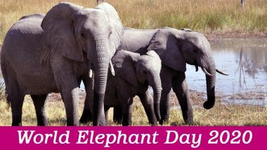 World Elephant Day 2020: विश्व हाथी दिवस आज, जानें हाथियों के संरक्षण को बढ़ावा देने वाले इस दिन का महत्व और उनसे जुड़े रोचक तथ्य