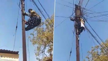 Beed Woman Climbs Electric Pole Barefooted: महाराष्ट्र के बीड में बिजली के तारों से खेलती है उषा जगदाले, बिना सीढ़ी के सरपट चढ़ जाती है खंभों पर, देखें वीडियो