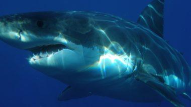Man Fights With Shark To Save Wife: पत्नी को बचाने के लिए शार्क से भिड़ गया पति, पूरे ऑस्ट्रेलिया में हो रही है शख्स की बहादुरी की तारीफ