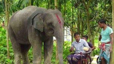 Man Gifts his Wife an Elephant: पति ने अपनी जमीन बेचकर पत्नी के सपनों को किया साकार, हाथी खरीदकर तोहफे में दी