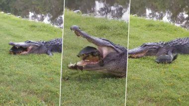 Alligator And Turtle Video: मगरमच्छ का जबड़ा मजबूत है या कछुए का कवच? इस वायरल वीडियो में छिपा है जवाब