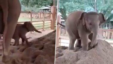 Baby Elephant Adorable Video: रेत की ढेर पर खेलते हुए नन्हे हाथी का प्यारा वीडियो हुआ वायरल, जिसे देख आपको भी आ जाएगी अपने बचपन की याद