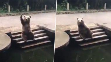 Bear Adorable Video: चिड़ियाघर में आए विजिटर्स से खाना मांगते भालू का वीडियो हुआ वायरल, उसके मनमोहक अंदाज पर फिदा हुए लोग