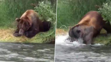 Hungry Bear: नदी किनारे बैठे भालू ने दिखाई गजब की चतुराई, झपट्टा मारकर ऐसे किया मछली का शिकार (Watch Viral Video)
