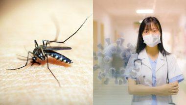 Dengue Provide Immunity Against COVID-19: डेंगू बन रहा है घातक कोरोना वायरस महामारी के खिलाफ रक्षा कवच, अध्ययन में हुआ खुलासा
