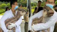 Real Dinosaur Cloned in China: चीन में क्लोन किए गए असली डायनासोर? जानें जुरासिक वर्ल्ड की प्रदर्शनी में डरावने जीव के वायरल वीडियो का सच