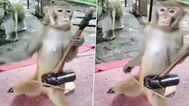 Monkey Viral Video: इंसानों की तरह एक बंदर ने जब 'इकतारा' से छेड़ा सुरीला संगीत, वायरल वीडियो देख आप भी हो जाएंगे उसके इस हुनर के कायल