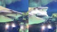 Shark Viral Video: अपने नुकीले दांतों को अंदर-बाहर करते शार्क का डरावना वीडियो हुआ वायरल, देखकर आप भी रह जाएंगे दंग