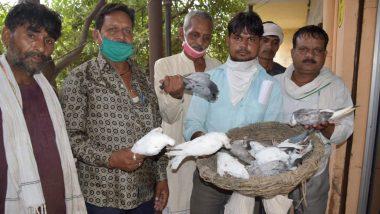 Uttar Pradesh: युवक ने 'अपमान' का बदला लेने के लिए मार डाले 11 कबूतर
