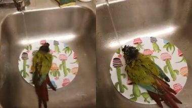 Bird Taking Bath in Kitchen Sink: किचन के सिंक में  नहाते हुए पक्षी का वीडियो हुआ वायरल, जिसे देख आपको भी आ जाएगा उस पर प्यार