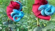 Rare Blue Snake Viral Video: लाल गुलाब के फूल से लिपटे नीले रंग के दुर्लभ सांप का वीडियो हुआ वायरल, यूजर्स बोले- दुनिया का सबसे सुंदर सांप