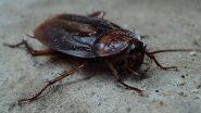 Cockroaches: घर में बढ़ते कॉकरोच के आतंक से हैं परेशान, निजात पाने के लिए आजमाएं ये जबरदस्त घरेलू उपाय