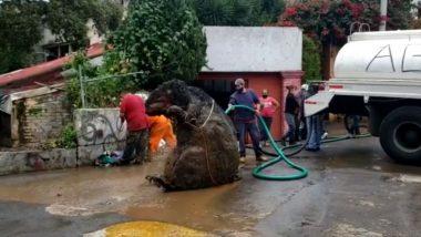 Giant Rat Video: नाले की सफाई करते समय श्रमिकों को मिला एक विशाल चूहा, मैक्सिको सिटी से वायरल हुए इस वीडियो को देख उड़े लोगों के होश