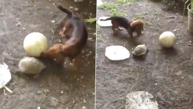 Turtle And Puppy Playing Together: नन्हें डॉगी के साथ खेल का लुत्फ उठाते नजर आया कछुआ, वीडियो हुआ वायरल