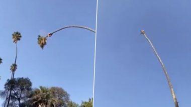 Viral Video: लंबे ताड़ के पेड़ पर बैठे शख्स ने उसे ही काटा, दिल दहला देने वाला वीडियो वायरल