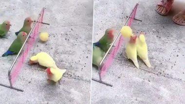 Little Birds Playing Volleyball: वॉलीबॉल खेल का जमकर लुत्फ उठाते दिखा छोटे पक्षियों का ग्रुप, दिलचस्प वीडियो इंटरनेट पर वायरल (Watch Video)