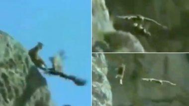 Eagle Killing a Goat: चट्टान से खींचकर सुनहरे चील ने बकरी को उतारा मौत के घाट, हैरान करने वाला वीडियो इंटरनेट पर तेजी से हो रहा है वायरल