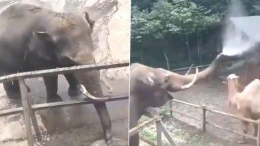 Elephant and Camel Video: ऊंट के साथ मस्ती के मूड़ में दिखा हाथी, सूंड में पानी भरकर किया यह काम...मजेदार वीडियो हुआ वायरल