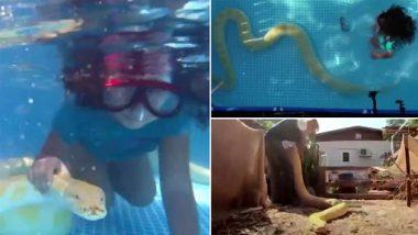 Shocking: इस 8 वर्षीय लड़की को अपने 11 फुट के पालतू अजगर के साथ तैरना पसंद है, वायरल वीडियो देख इंटरनेट पर डरे लोग