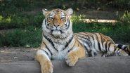 रोंगटे खड़े कर देने वाला VIDEO, शेर से बचकर भाग रहे थे लोग, फिर छलांग लगाकर एक शख्स को पकड़ा और फिर जो हुआ....