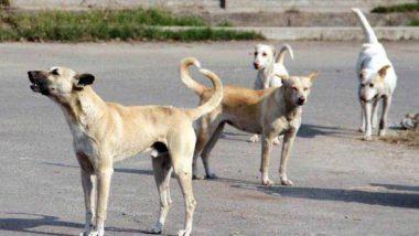 Viral Video: मिठाई की दूकान में घुसकर कुत्ते ने किया कुछ ऐसा काम, आप भी देखें मजेदार वीडियो