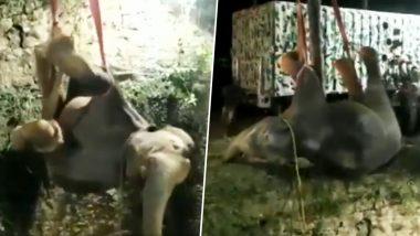 Elephant Calf Rescue: तमिलनाडु में गहरे कुएं में गिरा हाथी का बच्चा, करीब 16 घंटे की मशक्कत के बाद ऐसे किया गया रेस्क्यू (Watch Video)