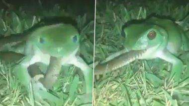 Frog Swallows Snake: जहरीले सांप को निगलने की कोशिश करते मेंढक का वीडियो हुआ वायरल, जिसे देख आपके उड़ जाएंगे होश