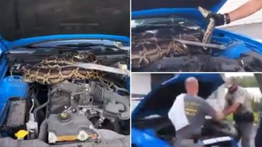 Florida: वाइल्डलाइफ के अधिकारियों ने कार के इंजन से निकाला 10 फीट लंबा अजगर, देखें वायरल वीडियो