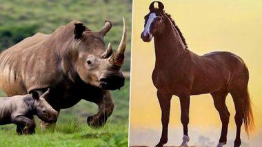 भारत में हुई होगी घोड़े-गैंडे और टापिर जैसे जीवों की उत्पत्ति, वैज्ञानिकों ने की अनोखी खोज