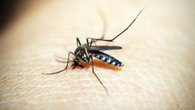 डेंगू और मलेरिया से इस साल दिल्ली में अब तक एक-एक व्यक्ति की मौत