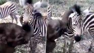 Baby Elephant Plays With Zebra: जेब्रा के साथ खेलता दिखा नन्हा हाथी, वायरल वीडियो में छुपा है दोस्ती का महत्वपूर्ण संदेश, आप भी देखें