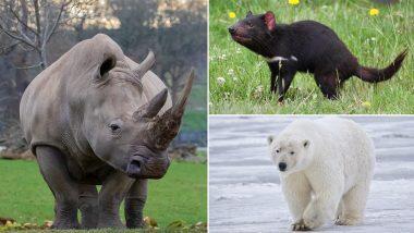 World Wildlife Conservation Day 2020: विश्व वन्यजीव संरक्षण दिवस आज, जानें दुनिया के 7 लुप्तप्राय जानवरों से जुड़ी रोचक बातें