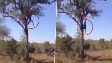 Viral Video: अपने बच्चे को बचाने के लिए जब तेंदुए से भिड़ गई मां, दो जानवरों की हवाई लड़ाई का दिलचस्प वीडियो हुआ वायरल